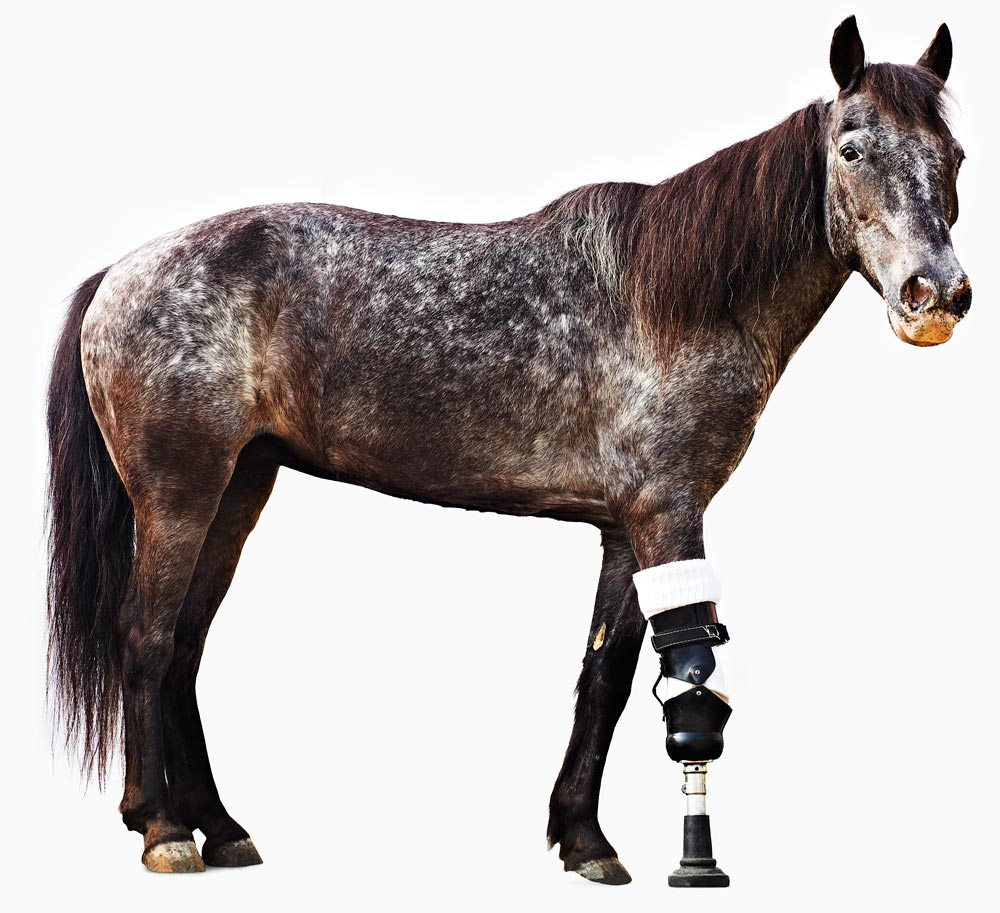 are implanted prosthetic legs for horses possible
